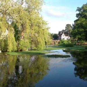 Bays Pond, Cheddar Village